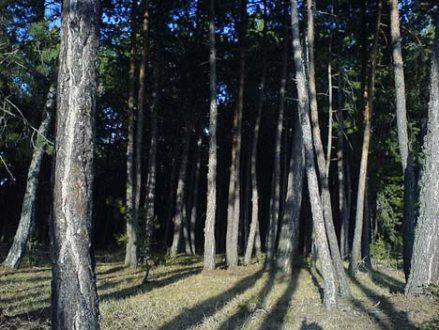 Trees in Turkey